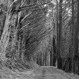 Trees along Sandymount Track, New Zealand Photographic Print by Atan Chua