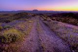 Arizona Roads Photographic Print by Morey Milbradt