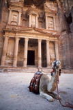 Camel Sitting at the Entrance to the Iconic Ruins at Petra, Jordan Photographic Print by Cultura Travel/Philip Lee Harvey