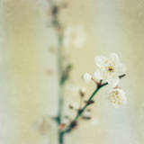 Signs of Spring Photographic Print by Jill Ferry