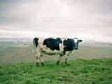 Dairy Photographic Print by Photo by Stas Kulesh