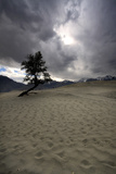 Alone in Skardu Desert Photographic Print by Yasir Nisar, Pakistan