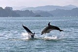 Playing around in the Bay of Islands Photographic Print by Steve Clancy Photography