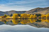 Willow Tree in Lake Tekapo Photographic Print by  huoguangliang