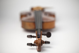 Close up of Violin Photographic Print by Foto Bureau Nz Limited