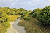 Path Trough Dunes Photographic Print by Raimund Linke