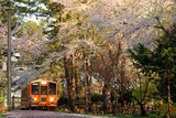 Train of Spring Photographic Print by The landscape of regional cities in Japan.