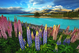 Lake Tekapo Photographic Print by Thienthongthai Worachat