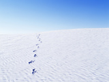 Footprints Coming from Horizon in White Sand Deser Photographic Print by Chris Parsons