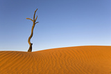 Africa, Namibia, Dead Tree by Sand Dune Photographic Print by  Westend61