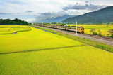 Rice Field with Train Photographic Print by Frank Chen
