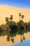 Um El Ma Salt Lake, Mandara, Sahara, Libya Fotografisk tryk af Nico Tondini