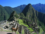 Machu Picchu with Llama Photographic Print by Eric Rose Photography