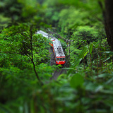 Train through the Woods Photographic Print by  ShigeruTanida