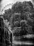 View of St James's Park Lake and the Millennium Wheel - London - England - United Kingdom Photographic Print by Philippe Hugonnard