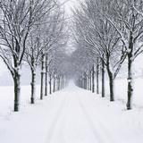 Small-Leaved Lime Trees in Snow Photographic Print by Ake Lindau