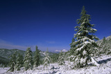 Russia Fir Trees and Spruces after a Snowfall Photographic Print by Andrey Zvoznikov