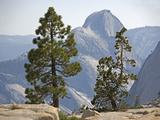 USA Half Dome Seen Through Jeffrey Pine Photographic Print