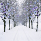Small-Leaved Lime Trees in Winter Snow Photographic Print by Ake Lindau