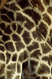 Southern Giraffe Markings Photographic Print