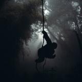 Mountain Gorilla Hanging on Vine Fotografisk tryk af Adrian Warren