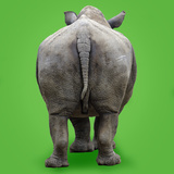 White Rhinoceros View of Animal from Behind Photographic Print