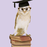 Barn Owl with Books Wearing Glasses and Mortar Board Photographic Print by Andy and Clare Teare
