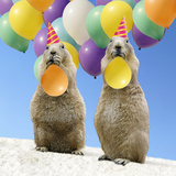 Black-Tailed Prairie Dog Pair with Balloons Photographic Print