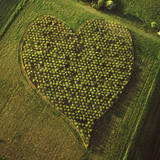 England Aerial View, Heart Orchard, Near Huish Hill Photographic Print