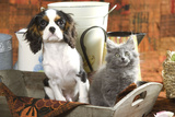 Cavalier King Charles Dog Puppy with Grey Kitten Photographic Print