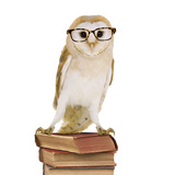 Barn Owl with Books Wearing Glasses Photographic Print by Andy and Clare Teare
