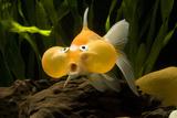 Aquarium Fish Photographic Print