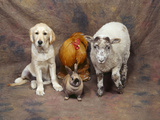 Animal Lineup Dog, Chicken, Sheep, Rabbit Photographic Print