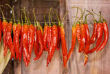 Chilli Peppers Collected for Drying in Barn Photographic Print