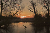 Grey Heron Walking across a Frozen Pond Photographic Print