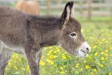 Donkey Baby 5 Days Old Lámina fotográfica