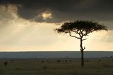 Africa Savannah Photographic Print