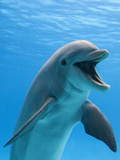 Bottlenose Dolphin Underwater Photographic Print by Augusto Leandro Stanzani