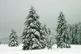 Norway Spruce in Heavy Snow Photographic Print