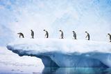 Penguins, Line Walking Along Iceberg Photographic Print