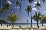 Palm Trees on Maracas Beach Photographic Print
