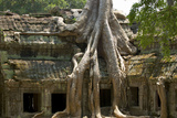 Angkor Tree Roots Cover Photographic Print