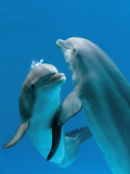 Bottlenose Dolphins, Pair Dancing Underwater Photographic Print by Augusto Leandro Stanzani