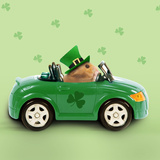 Hamster Driving Car Saint Patrick's Day Photographic Print