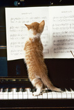 Ginger Cat Kitten on Piano Photographic Print