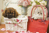 Persian Cat with Tibetan Spaniel Puppy in Baskets Photographic Print