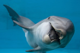 Bottlenose Dolphin Swimming on Side Underwater Photographic Print by Augusto Leandro Stanzani