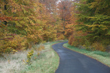 Beech Woodland, in Autumn Colour and Country Road Photographic Print