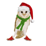 Barn Owl Wearing Christmas Hat, Scarf and Shoes Photographic Print by Andy and Clare Teare
