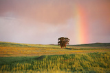 Rainbow at Twilight Photographic Print